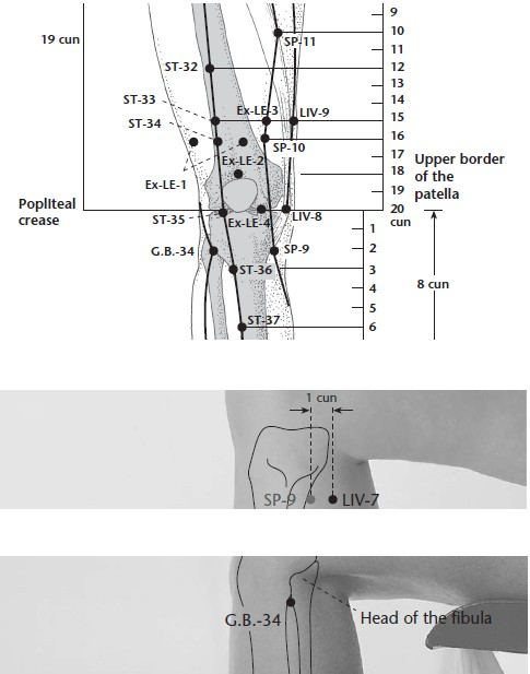 SP-9 - Spleen Meridian (SP) - Acupuncture Points - Publisher
